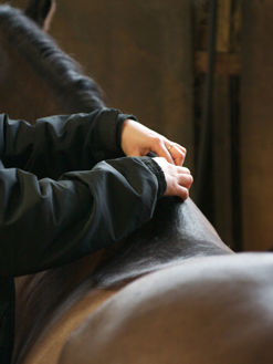 Una Browne McTimoney Equine and Canine Practitioner
